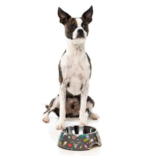 Coachella FuzzYard posoda za psa