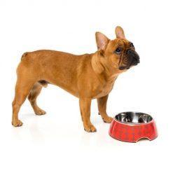 El Fuego Yeezy posoda za psa