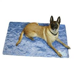 pes ki leži na hladilni blazini